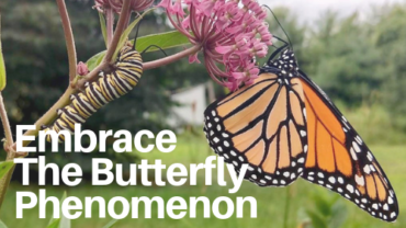 Embrace the Butterfly Phenomenon